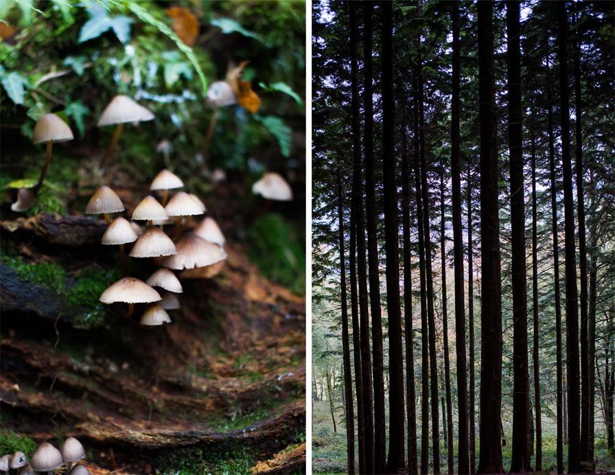 Autumn 2015, Blog comp 4