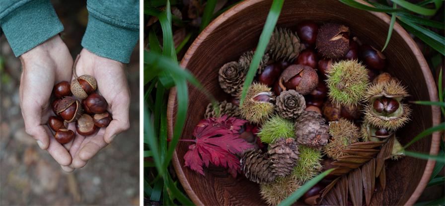 Autumn 2015, Blog comp 6