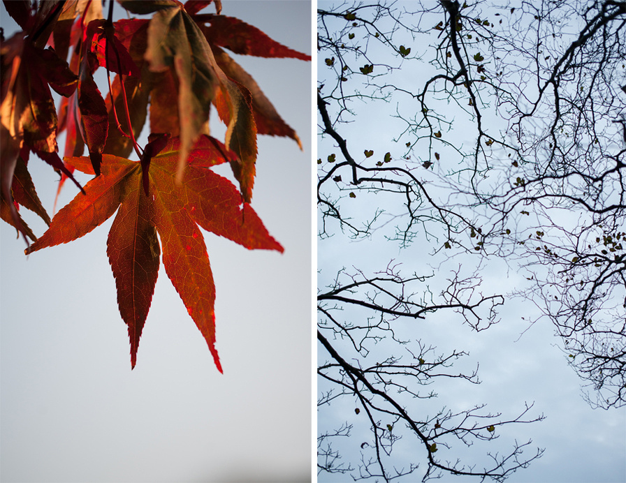 Autumn 2015, Blog comp 7