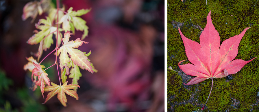 Autumn 2015, Blog comp 11